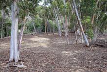 Walking Trail Through Bushland