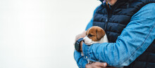 A Man Holding His Little Puppy Jack Russell In His Arms