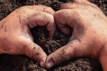 Children's Hands Hold The Soil.