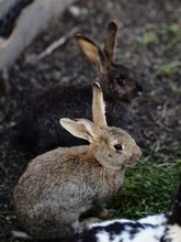 Two Rabbits In The Garden, Wildlife, Natural Background
