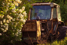 Old Abandoned Tractor In A Spring Garden At Sunset