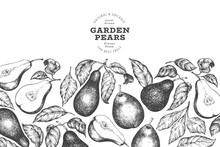 Pear Design Template. Hand Drawn Vector Garden Fruit Illustration. Engraved Style Garden Retro Botanical Banner.