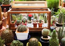 Cactus Houseplant Collection Decoration Set