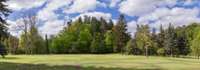 Big Glade Surrounded By Old Trees In Spring Park, Panorama