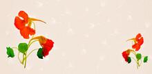 Blume Der Kapuzinerkresse Auf Weißen  Hintergrund, Makro