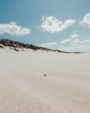 Bug Walking On The Sand On A Clean White Beach With Dunes And A Blue Sky