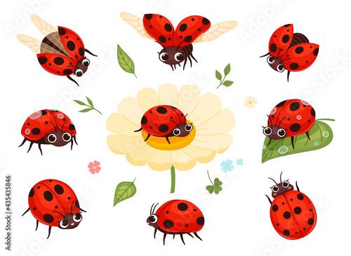 Red ladybugs Fototapet