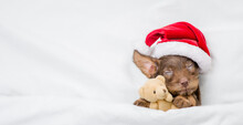 Cute Tiny Dachshund Puppy Wearing Red Santa Hat Sleeps Under White Blanket At Home And Hugs Favorite Toy Bear. Top Down View. Empty Space For Text