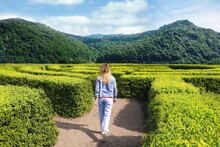 Young Woman In Hedge Maze On Sunny Day, Back View