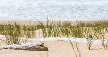 Seagrass And Driftwood On The Beach