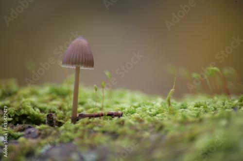 Valokuva un champignon dans ça mousse