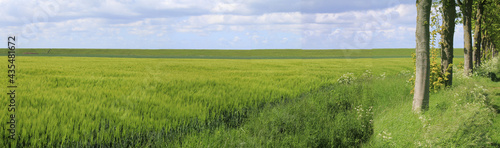 Photo a beautiful fresh green panorama of the dutch countryside in zeeland in springti