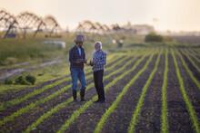 Two Farmers Standing In Corn Field Talking.