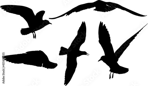 Fotografie, Obraz set of five seagulls black silhouettes