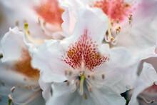 White Magnolia Flower, Nacka, Sverige, Sweden, Stockholm