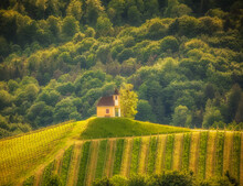 Small Chapel In The Vineyards