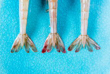 Closeup Of Shrimp Tails