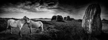 Big Neolitic Megaliths - Menhirs In Carnac France And Horses