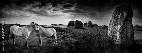 Fotografiet big neolitic megaliths - menhirs in Carnac France and horses