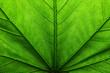 Leinwandbild Motiv green leaf texture