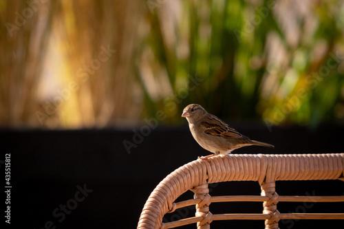 Fotografie, Obraz Pajaro posado en la silla de un restaurante 2
