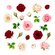 Burgundy, Pink And White Rose Flowers And Buds And Green Leaves. Set Of Floral Design Elements. Vector Illustration.