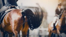 The Fluttering Black Tail Of A Bay Galloping Horse. Overcome Obstacles.
