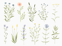 Set Of Watercolor Widflowers. Hand Drawn Summer Botanical Design Elements For Wedding Invitation, Greeting Card, Postcard, Stickers And Other.