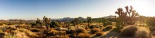 Panorama Shot Of Desert Flora Nature With Joshua Trees And Dry Plants In Joshua Tree National Park In America