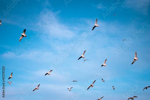 Fotografia Mouettes et ciel bleu