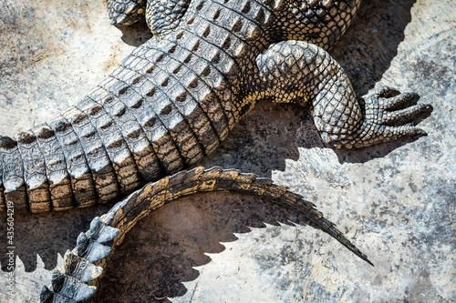 Foto Closeup of crocodile skin texture