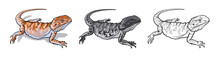 Reptile Lizard Animal. Reptile In Natural Wildlife Isolated In White Background. Color, Black And White Illustration And Outline For Coloring. Vector Illustration