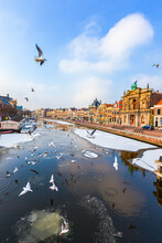 Seagulls Flying Over The Frozen Spaarne River Canal In Winter, Haarlem, Amsterdam District, North Holland, The Netherlands