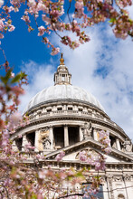 St. Paul's Cathedral With Cherry Blossom In Springtime, London, England, United Kingdom