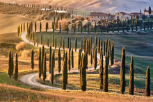 Tree-lined Avenue With Cypresses At Sunset In Tuscany, Italy