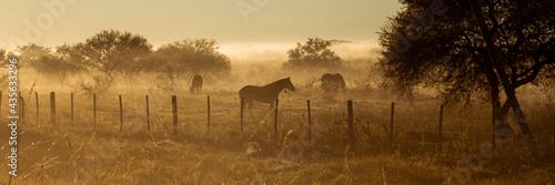 Billede på lærred Amanece con bruma en el campo
