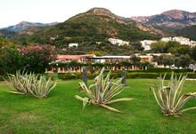 Sveti Stefan State Park In Montenegro . Aloe Vera Plant Growing In The Tropical Park