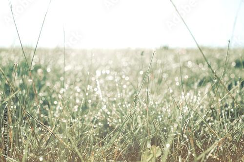 Papel de parede Green grass with drops of dew, close-up.