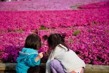 富士の芝桜と子供