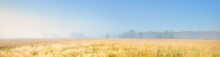 Forest Meadow At Sunrise. Pure Morning Sunlight, Sunbeams, Fog, Haze. Golden Spikelets Close-up. Atmospheric Landscape. Picturesque Panoramic Scenery. Nature, Environmental Conservation, Ecology