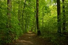 Ein Wald Im Frühling Mit Frischen Grünem Laub