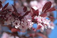 Primavera Desenfocada