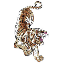 A Beautiful And Ferocious Tiger. Draw And Text, Sublimation Design And Vector T-shirt Fashion Design.