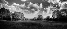 Black And White Dramatic Landscape With Meadow Wild Grass Under Cloudy Sky. Artistic Monochrome Nature Landscape, Dark Panoramic View. Trees In Park With Soft Sunlight. Abstract Nature Scenery