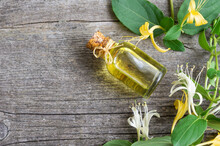 Glass Bottle Of Honeysuckle Flower Essential Oil With Fresh Flowers, Lonicera Caprifolium