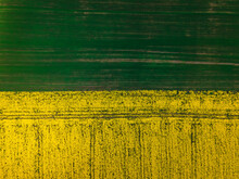 Top Down Aerial View Of Field Of Rapeseed And Field Of Green Wheat - Plant For Green Energy