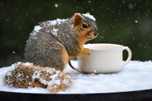 Fox Squirrel Eating From Cup During Snow Storm