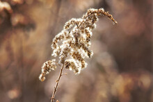 Sunlight Shining On Weed In Autumn
