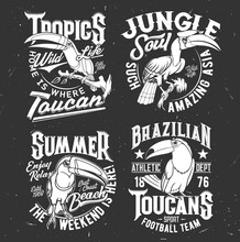 Toucan Bird T-shirt Retro Print Template. Football Sport Team, Tropical Wildlife And Summer Leisure Apparel Custom Vector Print With Animal Mascot, Great And Rhinoceros Toucans, Grungy Typography