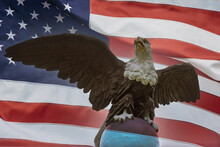 Patriotic Symbol With American Bald Eagle On American Flag